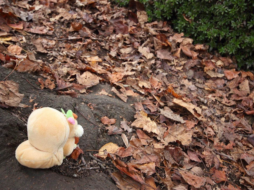 soreiyuichigo!51.jpg