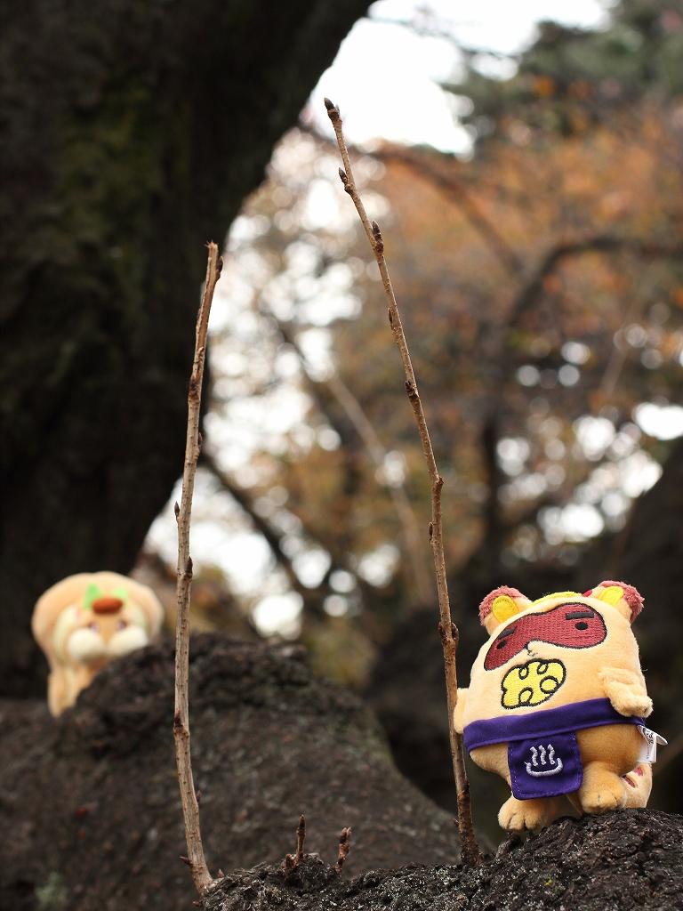 soreiyuichigo!55.jpg