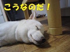 IMG_0457-1.jpg