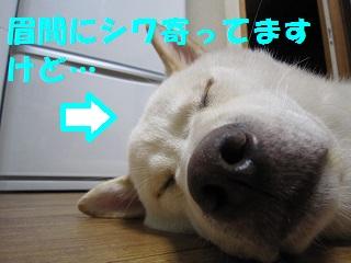 IMG_0463-1.jpg