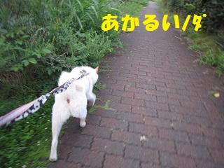 IMG_0729-1.jpg
