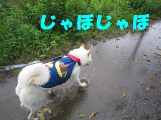 IMG_1497-1.jpg