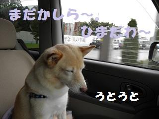 PA010296-1.jpg