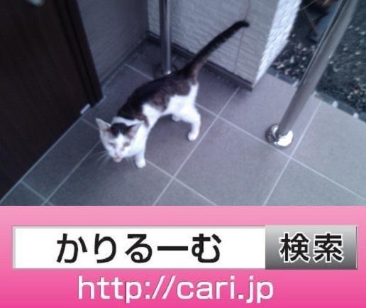 moblog_3eb6c2d6.jpg