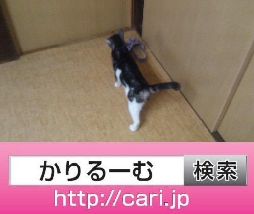moblog_5cee3a14.jpg