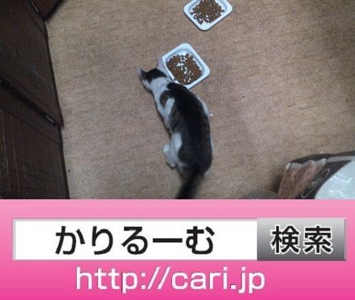 moblog_832dcdb8.jpg