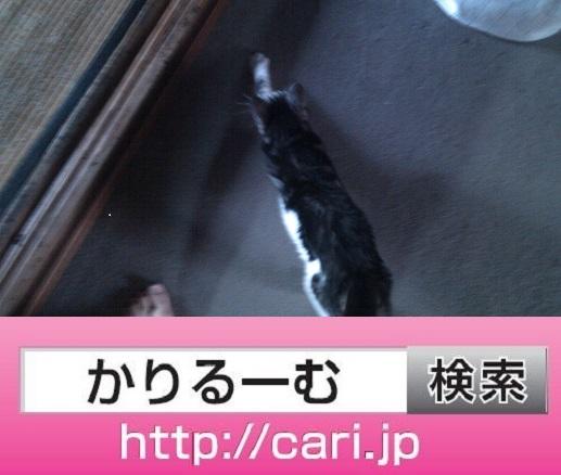 moblog_8a40bba5.jpg