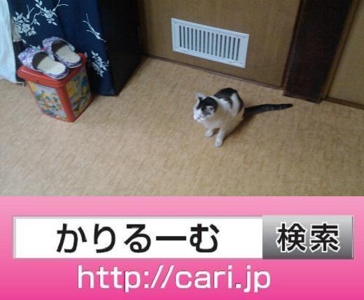 moblog_997e4a72.jpg