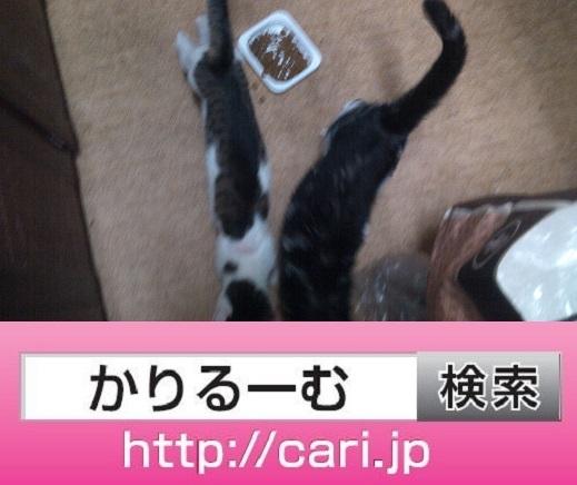 moblog_aa4f433c.jpg