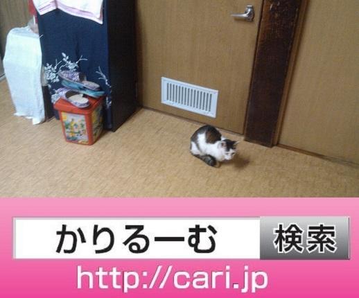 moblog_d14e6416.jpg