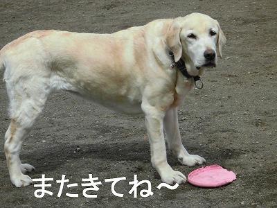 16yuki-.jpg
