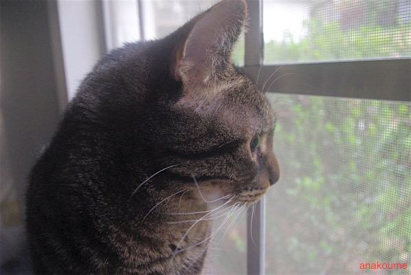 猫ちゃ〜〜ん3