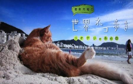 岩合光昭の世界ネコ歩き「リオデジャネイロ」