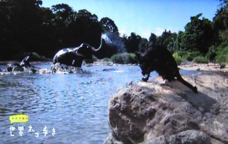 岩合光昭の世界ネコ歩き「スリランカ」