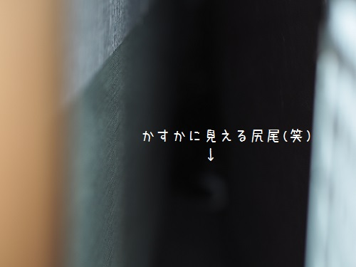 PA240013.jpg