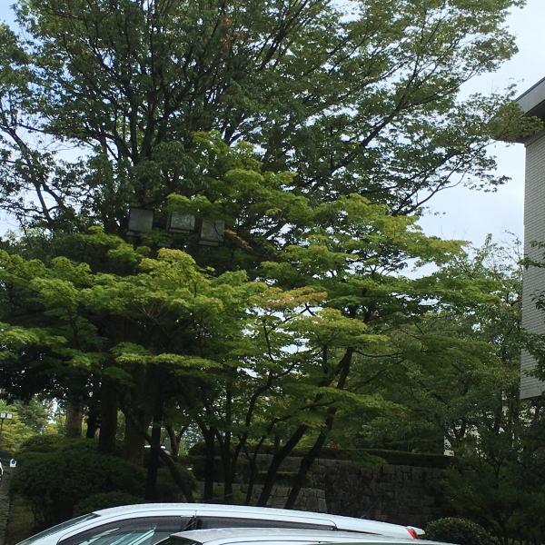 石川県立美術館で「ビアズリーと日本」を見てきました~