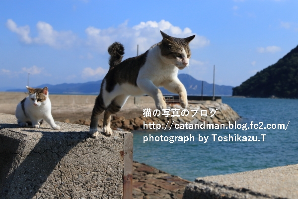 IMG_0225s.jpg