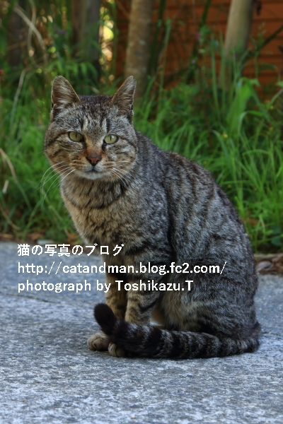 IMG_39350s.jpg