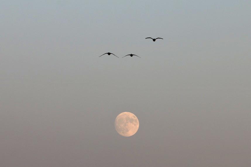 moon4791.jpg