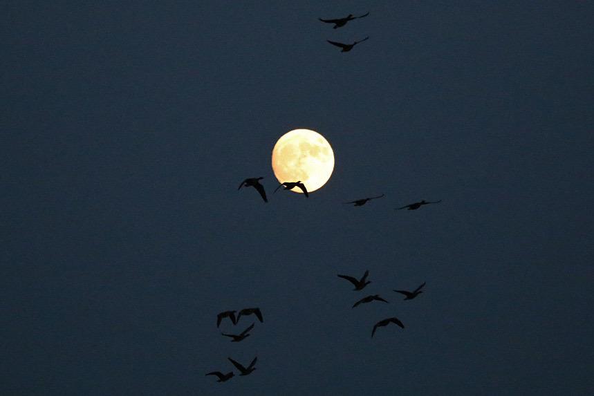 moon5001.jpg