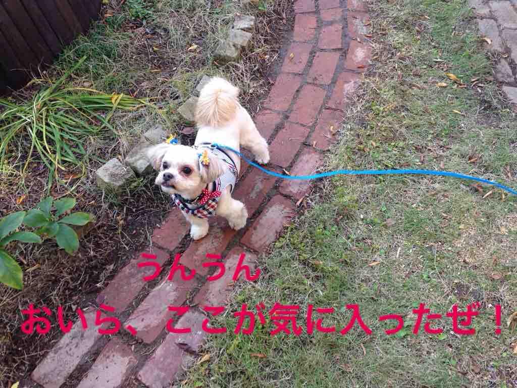 fc2blog_20161116231612a8e.jpg