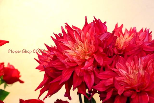 熱唱 ダリア 秋の花 赤 花束 アレンジ 秋