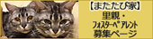 またたび家@保護猫シェルター