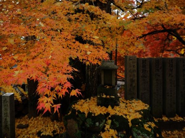 境内の紅葉と落葉