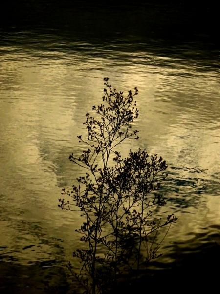 秋の水面02