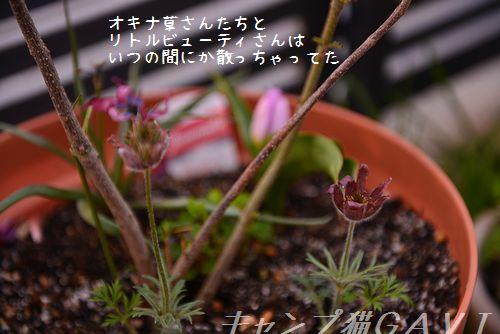 160412_3569.jpg