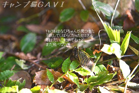 160816_8881.jpg