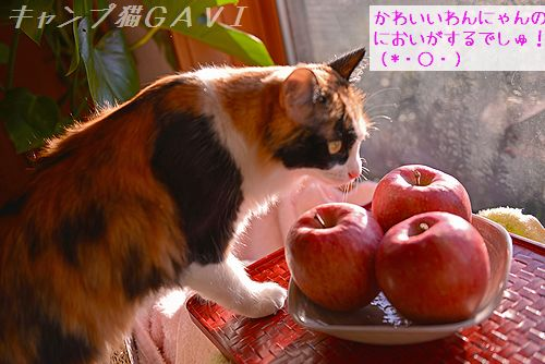 1612_4270.jpg