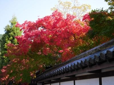 Kyoto201611-435.jpg