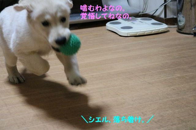 IMG_6354.jpg