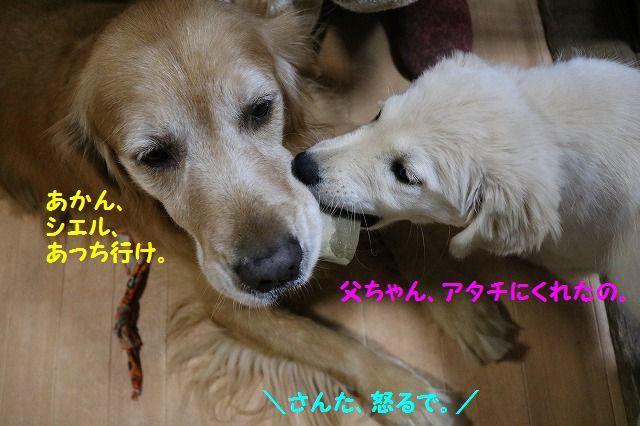 IMG_6960.jpg