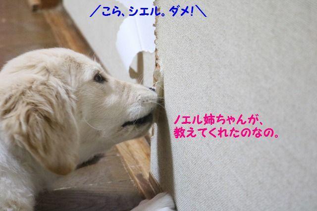 IMG_7721.jpg