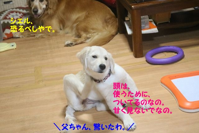 IMG_8420.jpg
