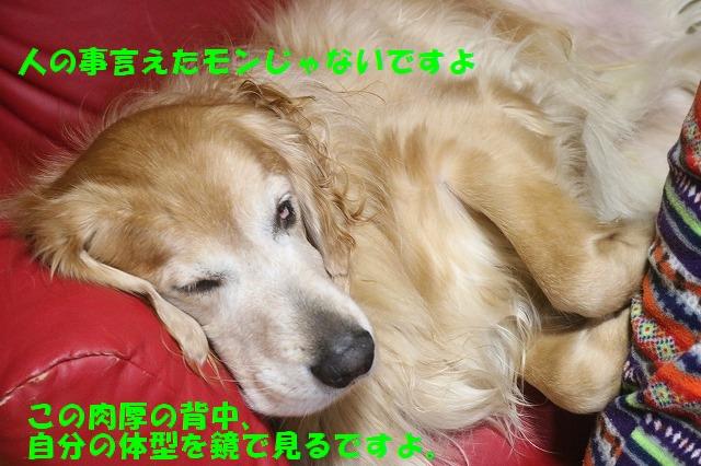 IMG_8560_20161124185127f75.jpg