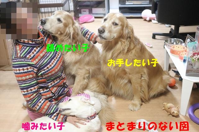 IMG_8568_201611241851305db.jpg