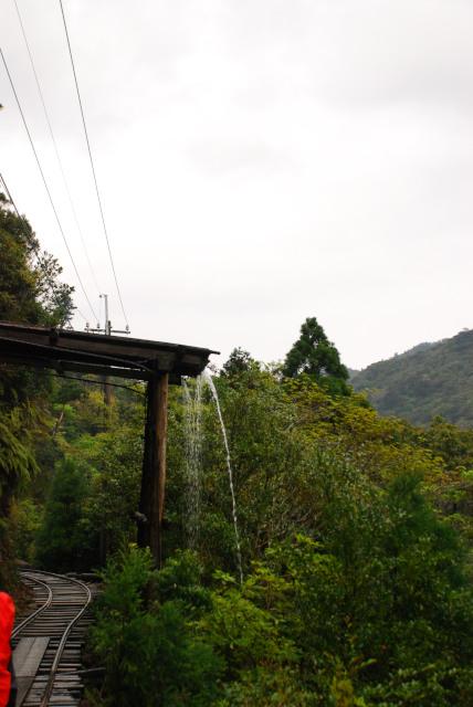 屋久島_荒川から縄文杉へ_流れ落ちる雨水