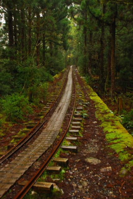 屋久島_荒川から縄文杉への登山道_スギ林を真っ直ぐ走るトロッコ軌道