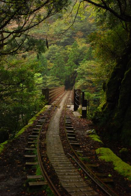 屋久島_荒川から縄文杉への登山道_小杉谷の橋