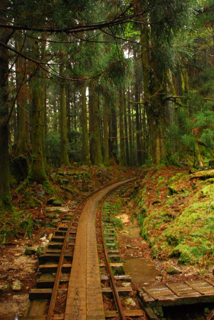 屋久島_荒川から縄文杉への登山道_杉林の中をカーブするトロッコ軌道