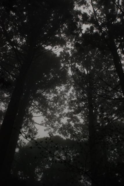屋久島_縄文杉への登山道_雨の森に霧が深くなってきた