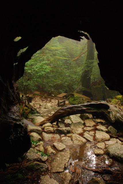屋久島_縄文杉への登山道_ウィルソン株_中から見上げるハート