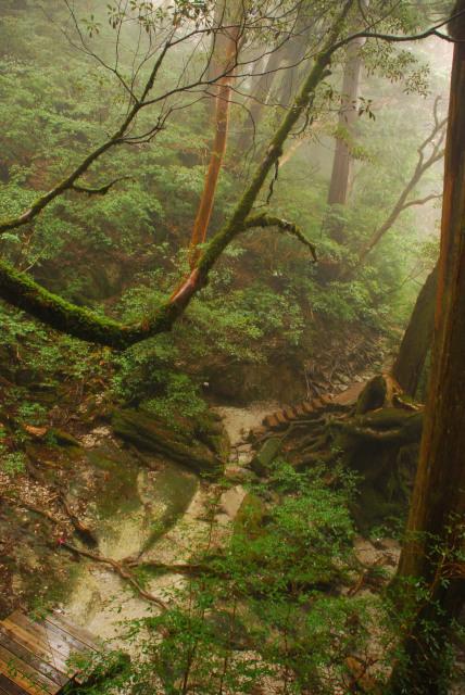 新高塚小屋から縄文杉への登山道