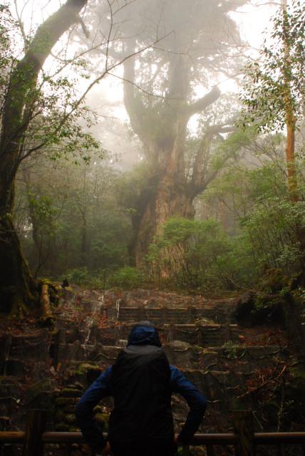 縄文杉と記念写真