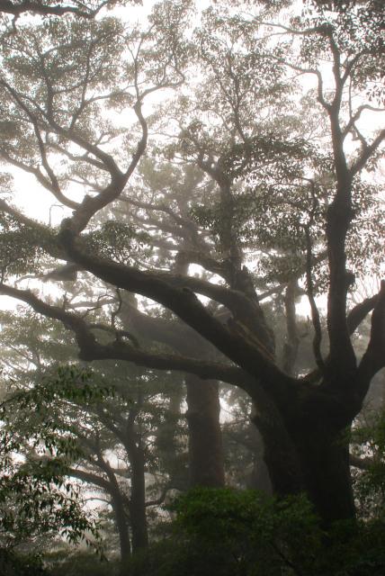縄文杉から高塚小屋への登山道