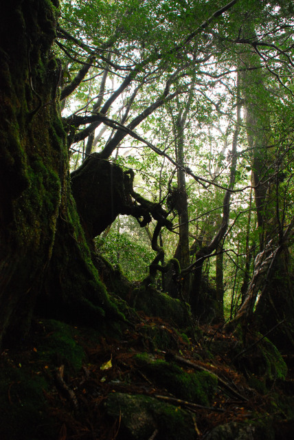 辻峠への登山道_大きな岩棚の下で雨宿り_雨の森の眺め