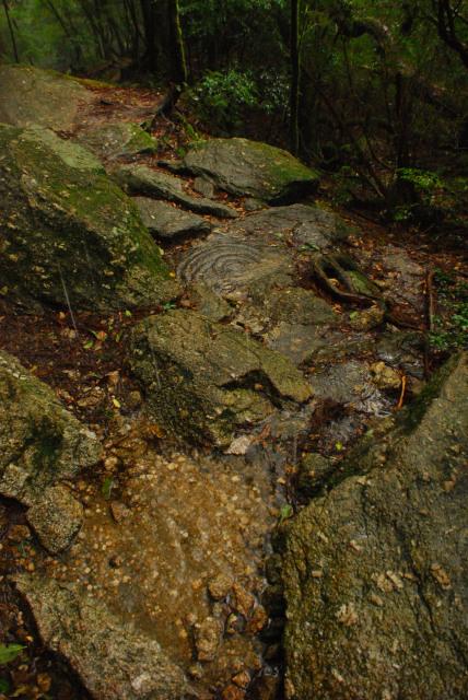 辻峠への登山道_大きな岩棚の下で雨宿り_地面に落ちる雨垂れと水たまり